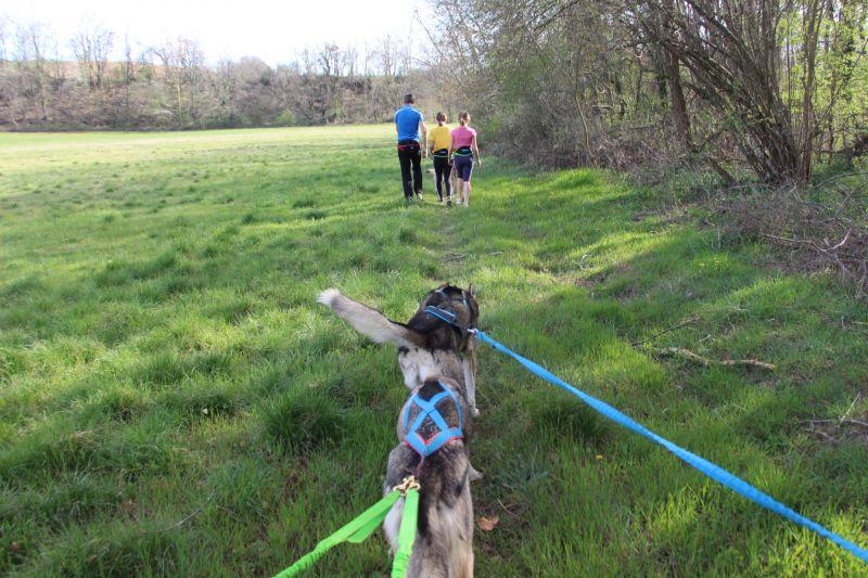Une activité hors du commun: la cani-rando en Drôme des Collines