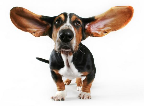 L écoute active pour découvrir les besoins